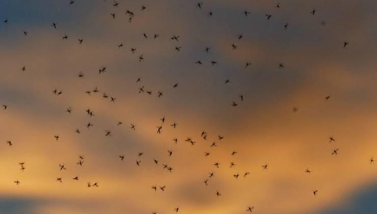 Sciame di zanzare (Foto Pixabay)