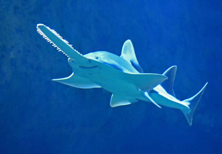 Difesa delle creature marine