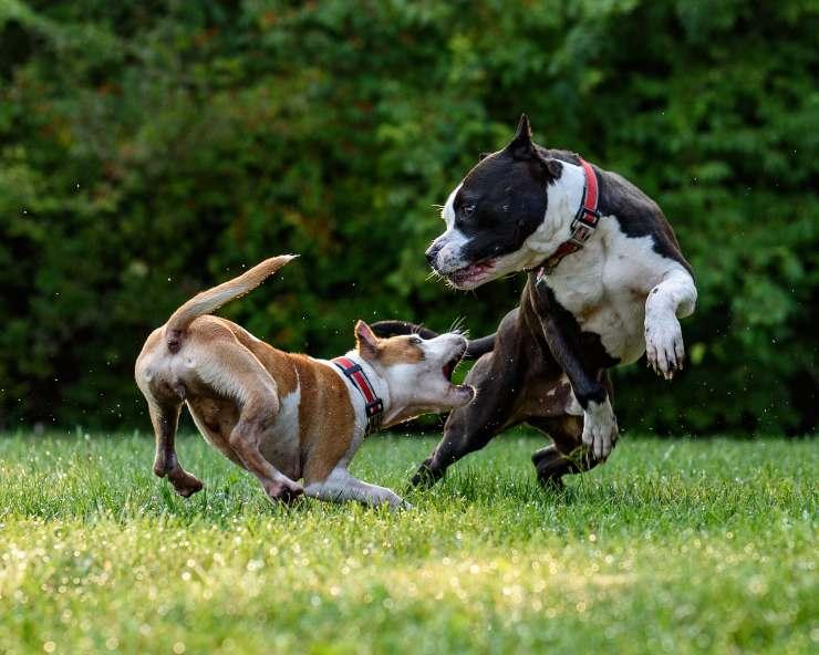 Il comportamento del cane