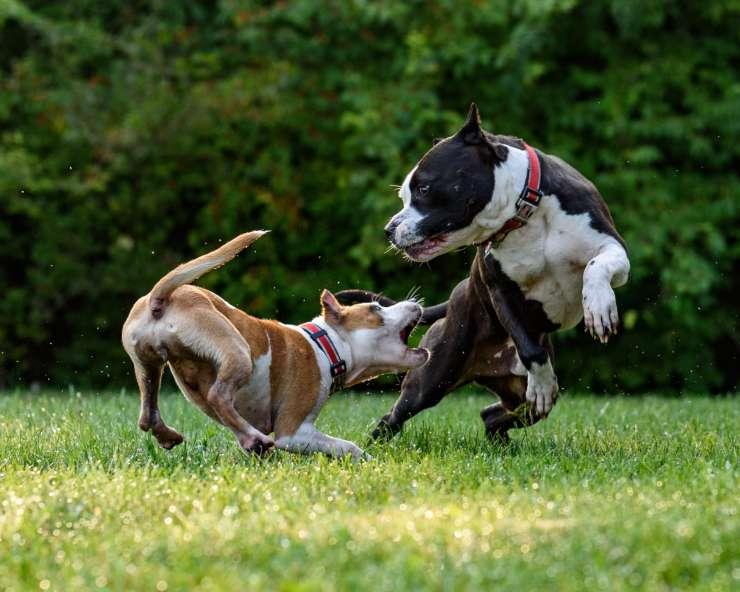 Addestrare il cane a socializzare