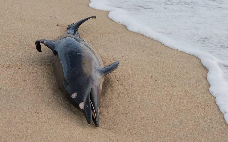 delfino sulla spiaggia