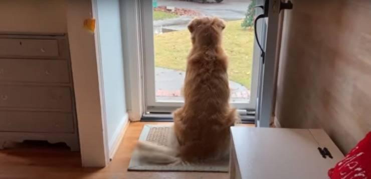 cane accarezzare postini