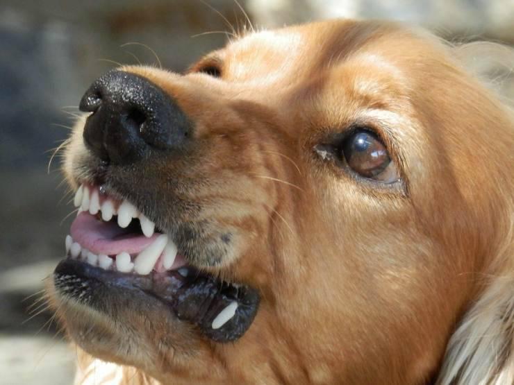 incontro branco cani randagi