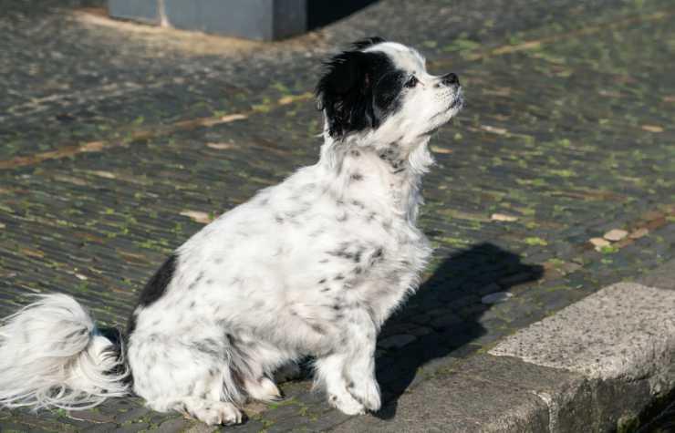 L'attesa del cagnolino (Foto Pixabay)