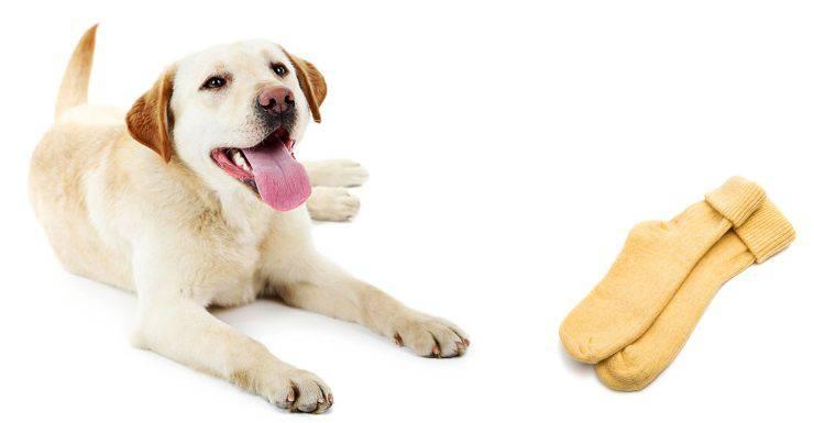 Cane mangia i calzini