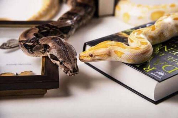 Malattie dei serpenti domestici