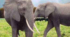 Elefanti (Foto Pixabay)