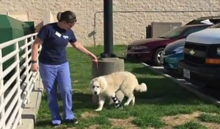 Casper che prova a camminare (Foto video)