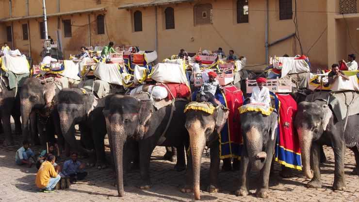 elefanti turismo Thailandia