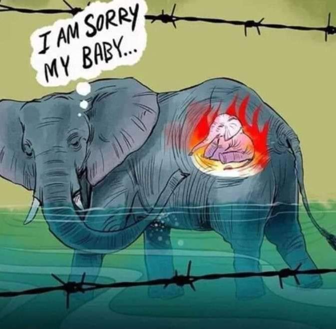Elefante ucciso con un ananas pieno di petardi: era in stato di ...