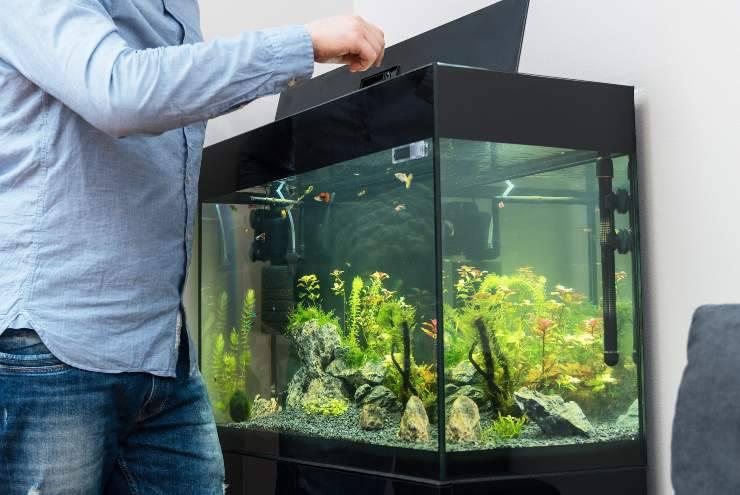 errori da non commettere con i pesci da acquario