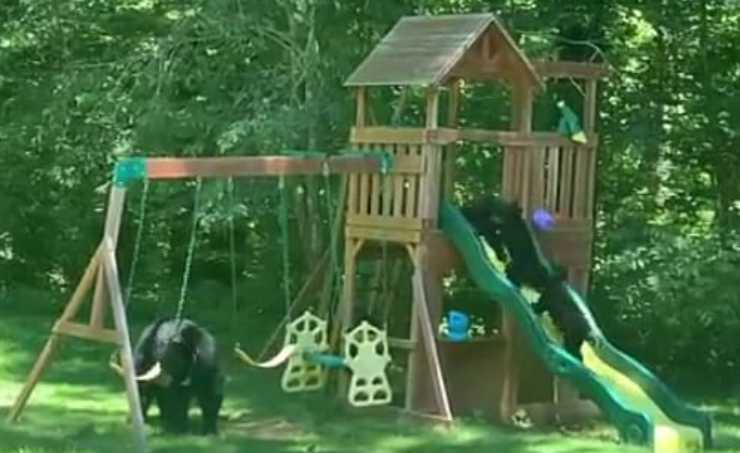 Gioia e divertimento (Foto video)