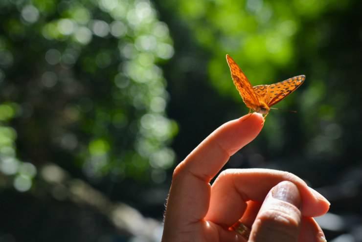 Farfalla sul dito