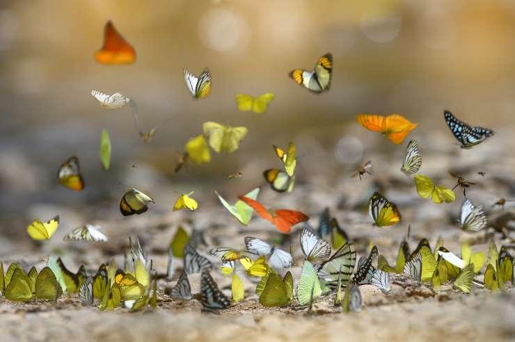 cosa significa vedere una farfalla