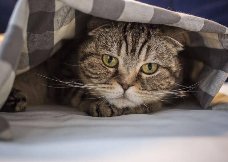 fattori stress gatto
