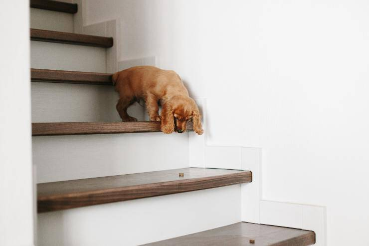 fido scende le scale