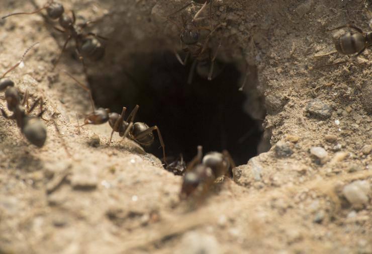 dove fanno i bisogni le formiche