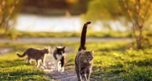 Punture di insetti nel gatto: come comportarsi e quali rischi ci sono