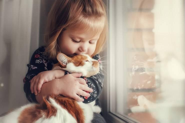 gatti che tollerano gli sconosciuti