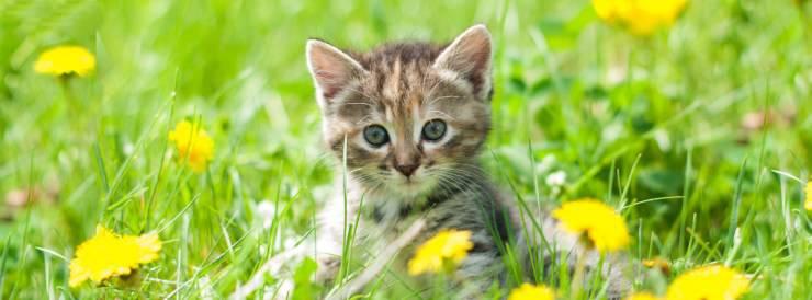 Come passare un'estate con il gatto in sicurezza e allegria
