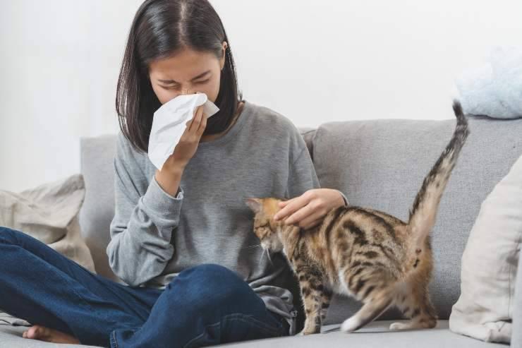 come gestire gli allergeni del gatto in casa