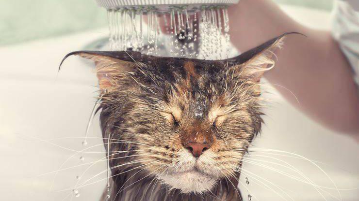 Lavare il gatto anziano