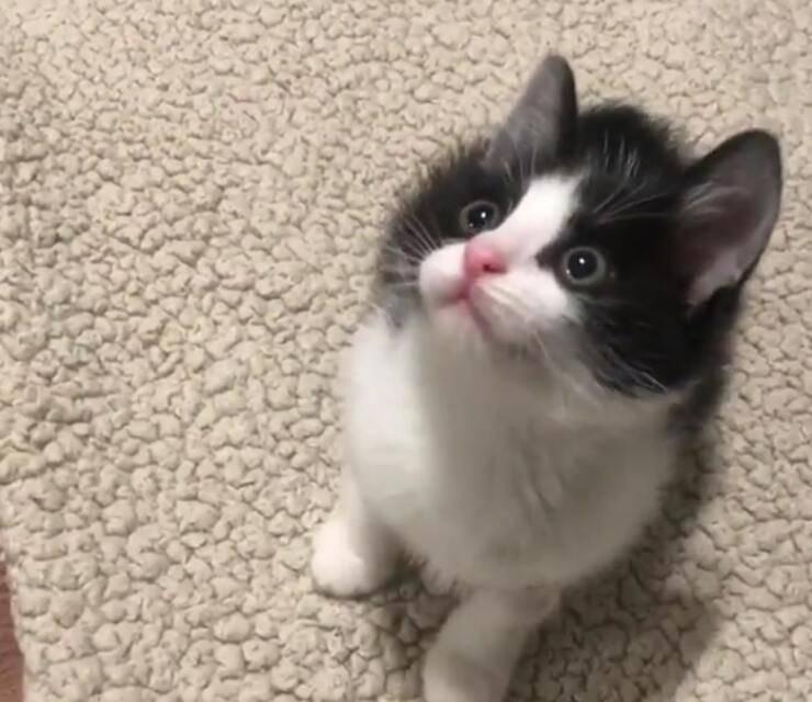 Gatto minaccioso