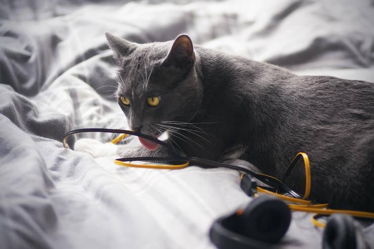 gatto cavo