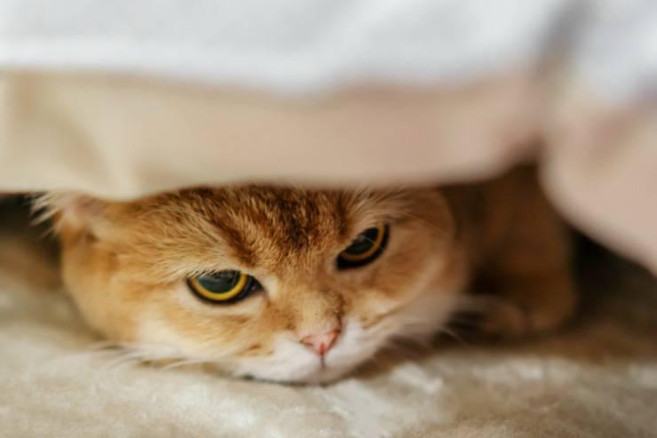 Autismo nel gatto
