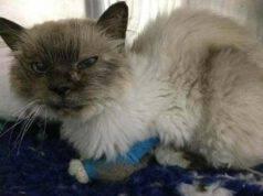 gatto malato dopo 10 anni torna a casa