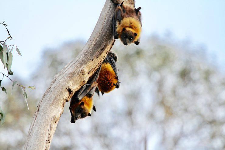 Casetta per pipistrelli