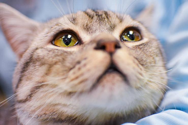 combattere ansia nei gatti
