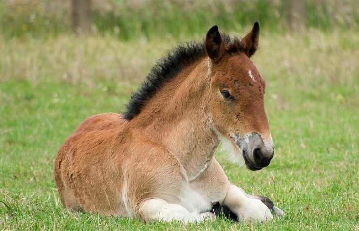 Un piccolo cavallo (Foto Pixabay)
