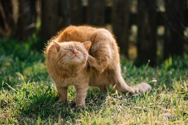 Problemi della pelle nel gatto