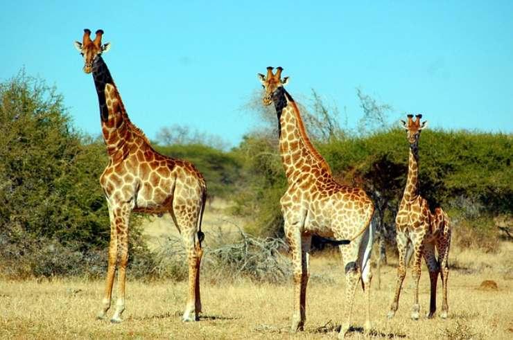 i mammiferi più pesanti al mondo