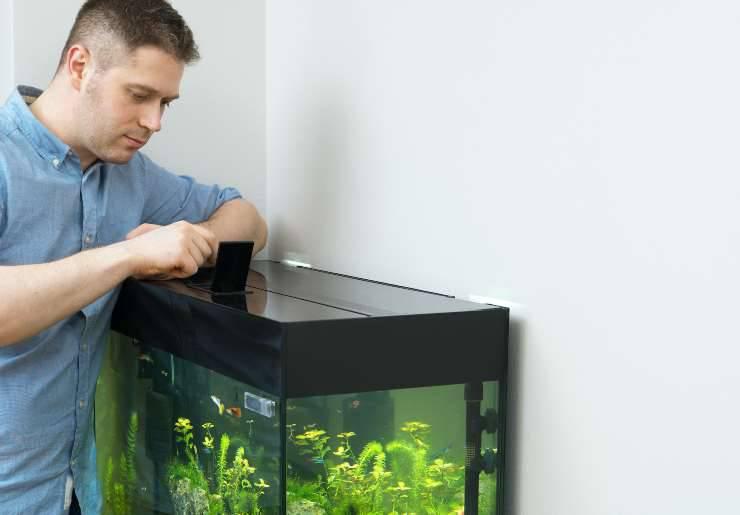 I pesci riconoscono il loro acquariofilo