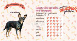 English Toy Terrier Black and Tan scheda razza