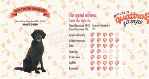 Flat coated retriever scheda razza