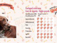 Foxhound americano scheda razza