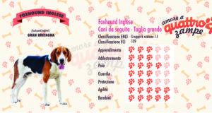 Foxhound inglese scheda razza