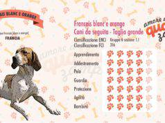 Francais blanc e orange scheda razza