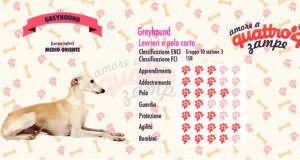 Greyhound scheda razza