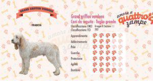 Grand griffon vendeen scheda razza