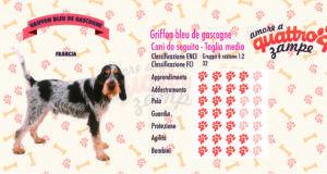 Griffon bleu de gascogne scheda razza