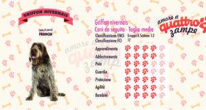 Griffon nivernais scheda razza