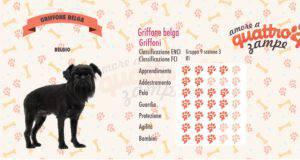Griffone Belga scheda razza