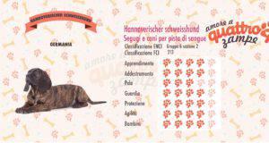 Hannoverischer schweisshund scheda razza