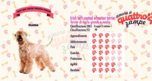 Irish soft coated wheaten terrier scheda razza