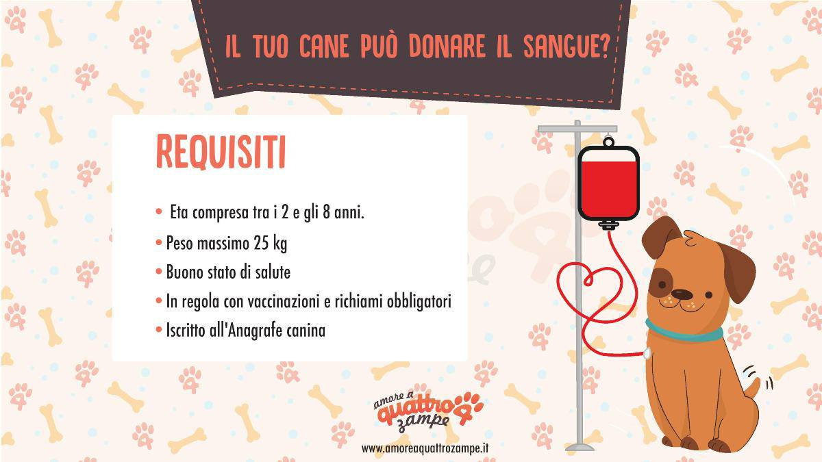 infografica donazione sangue (cane)
