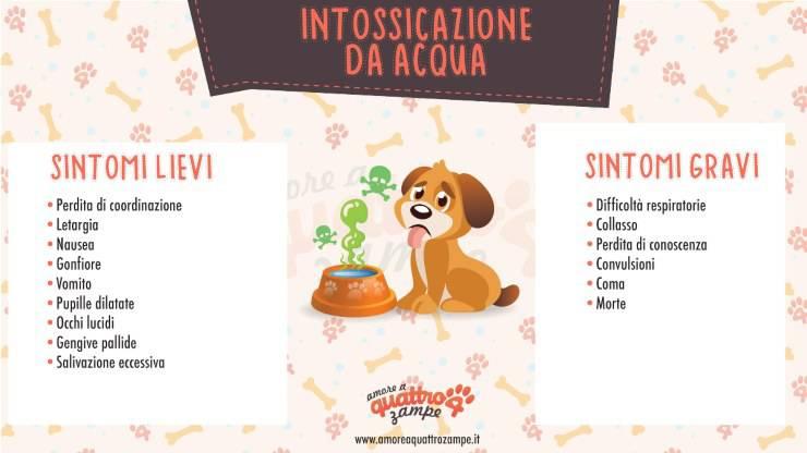 infografica intossicazione acqua cane